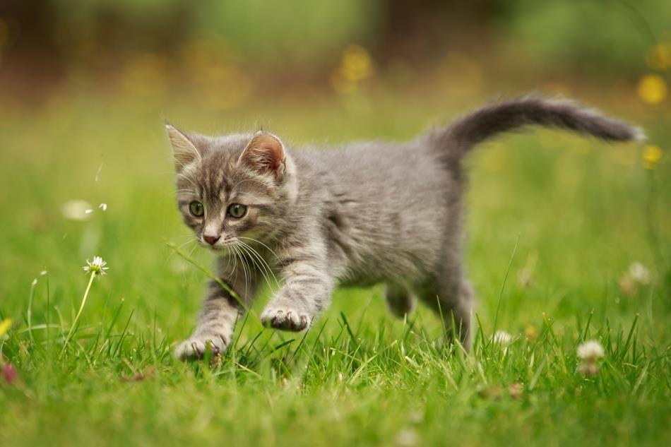 """Konkurs fotograficzny """"Mój przyjaciel kot"""" – Zespół Szkolno-Przedszkolny w  Świątnikach"""